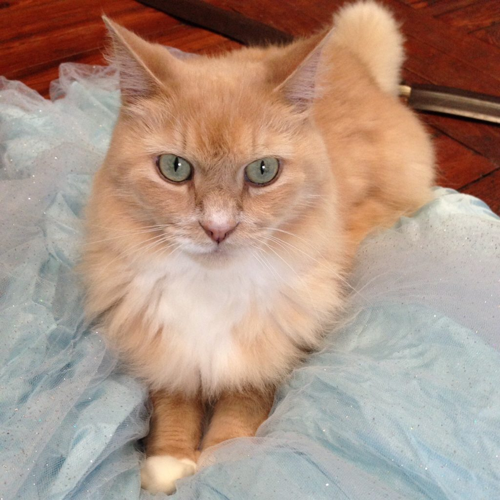 Photo of a yellowish cat sitting on some sparkly cloth